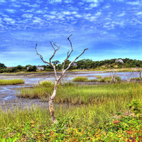 Salt Marsh Photograph by Tammy Wetzel - Salt Marsh Fine Art Prints and Posters for Sale