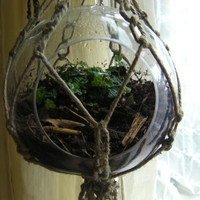 Hanging macrame terrarium
