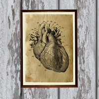 Heart Anatomy print on old paper Antiqued decoration 8.3 x 11.7 inches