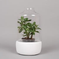 Serax Greenhouse Pot H38cm - Small/High