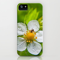 Wild white wet with visitor iPhone & iPod Case by Pirmin Nohr