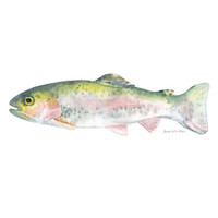 Watercolor Painting Rainbow Trout Original Watercolor Fisherman Painting