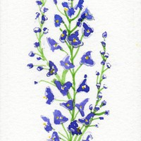 Larkspur birth flower for July original Watercolor floral ACEO | amyelyseneer - ACEO on ArtFire