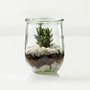 Live Terrarium To Go, Small Weck Jar