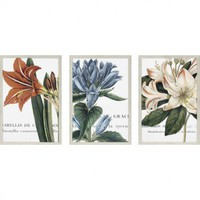 Paragon Botanique Florals Art Set - Botanique Series - All Wall Art - Wall Art &amp; Coverings - Decor