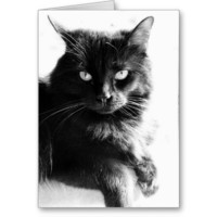 Striking Black Cat, blank note cards from Zazzle.com
