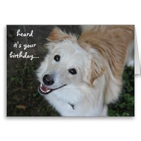 Cute puppy birthday card from Zazzle.com