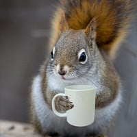 Bright Eyed & Bushy Tailed - Coffee Loving Squirrel (5x7)