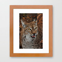 Lynx Framed Art Print by catspaws