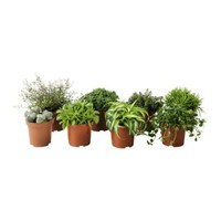 HIMALAYAMIX Potted plant, assorted species plants - IKEA