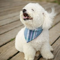The Rover Madras Neckerchief  Medium by RoverDog on Etsy