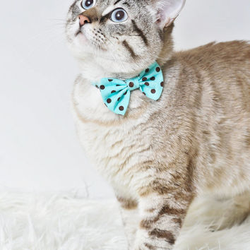 Robin Egg Blue With Chocolate Dots Breakaway Cat Bow Tie Collar