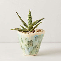Anthropologie - Grassland Pot