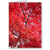 Bright Red Japanese Maple Tree Card from Zazzle.com