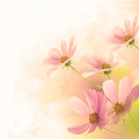 DIGITAL Download Pink Flower Writing Fine Art Print 300dpi Different Sizes Available Wall Art