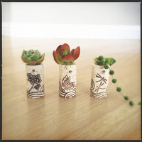 DIY Succulent Mini Garden Wine Corks, Zen, Chrysanthemum, Dragon Fly, Butterfly, Succulent Plants, Decorated Corks