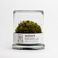 $26.00 MOSSER scientific glass moss terrarium &amp; spray bottle by themosserstore