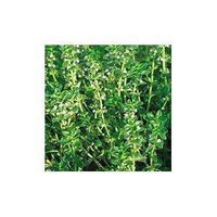 Amazon.com: Thyme Herb 200 Seeds - GARDEN FRESH PACK!: Patio, Lawn & Garden