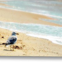 Lonely Gull At The Surf Stretched Canvas Print / Canvas Art By Dick Wood