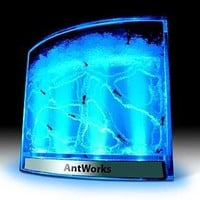 Blue AntWorks Illuminated Space Age Ant Habitat:Amazon:Pet Supplies