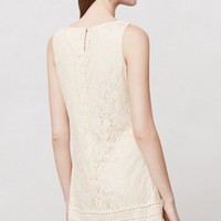 Blanched Lace Shift