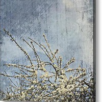 #blossom #spring #all_shots Acrylic Print By Alexandra Cook