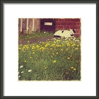 A #cat & #flowers. .. #today #wales Framed Print By Alexandra Cook