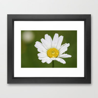 Daisy © Framed Art Print by JUSTART