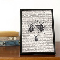 Entomology Book Print | Folly Home | Design-led Gifts, Home wares, Vintage Finds