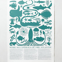 Atlantic Sea Animals Print