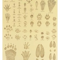 ANIMAL TRACKS [Z - 26 - A] - $9.98 : Posters57.com, Your Source for Posters