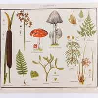 Botanical School Poster, Flowers, Ferns and Funghi,  Macmillans Nature Class Posters, Vintage Poster, Wall Hanging