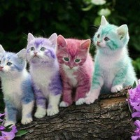 Kitty Rainbow