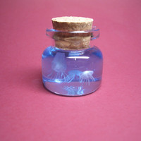 Tiny jellyfish in a tiny bottle