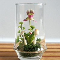 Tiny Lady Slipper Orchid Terrarium by MissMossGifts