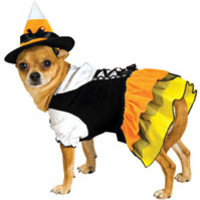 Candy Corn Witch Dog Costume - Dog Costumes
