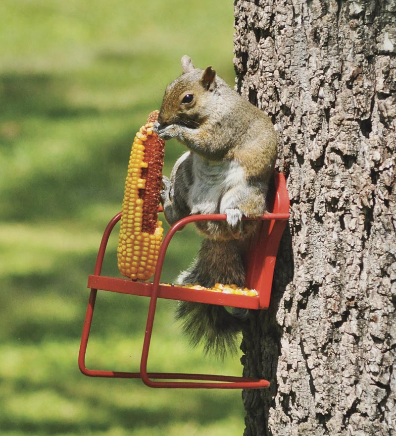 Red Retro Lawn Chair Squirrel Feeder From Plowhearth Com