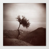 Lonely Tree Stretched Canvas by Marianna Tankelevich