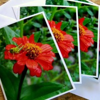 Grasshopper on Red Flower - Set of 4 Photo Note Cards 2009-08-18aNW