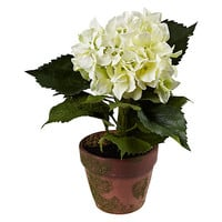 Buy Potted Hydrangea, Cream online at John Lewis