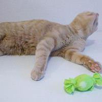 Medium Size Catnip and Crinkle Toy Green Handmade Soft Cat Toy All Natural Catnip