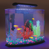 The GloFish Shangri-La