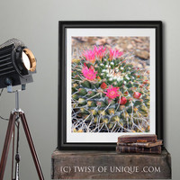 Blooming Snow Cactus, Macro cactus photography, Macro flower photography, Cactus and snow, - Pink flowers, Coral, yellow, Pink, green, snow