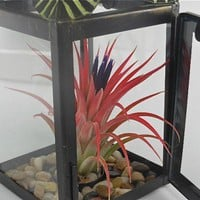 Black Lantern with Palm Leaves and Ionantha Huamelula Air Plant | TheLivingArt - Wedding on ArtFire