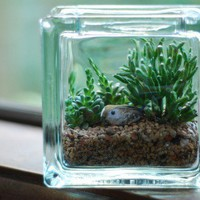succulent terrarium with bird by weegreenspot on Etsy