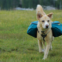 Approach Pack™ Dog Pack – Backpacking Adventure Pack for Canine Hikes - from Ruffwear