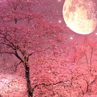 "Nature Photography - Dreamy Pink Trees Stars, Moon Stars Night, Fantasy Pink Spring Nature, Fine Art Photo 8"" x 10"""