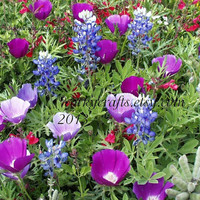Texas wildflower & bluebonnet seeds