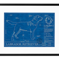 Dog Blueprints $185