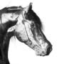 equus2studios